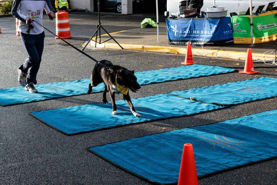 A dog successfully completes the 5K run just seconds ahead of its owner.