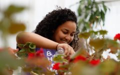 Senior Hana Abay waters plants in the greenhouse as part of Eco Club. Among the plants she grows at the school are tomatoes, echinacea and bachelor's buttons.